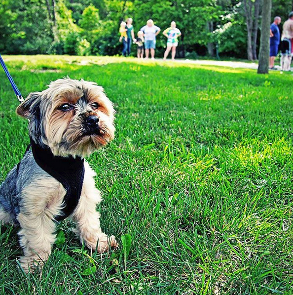 National Dog Day – Pet Friendly RV Parks in NJ - Crossroads