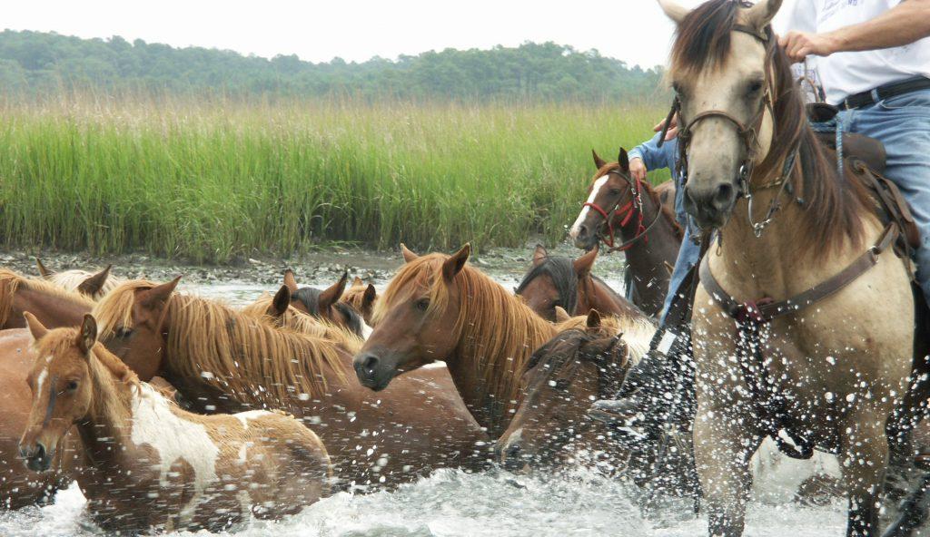 Wild Pony Swim