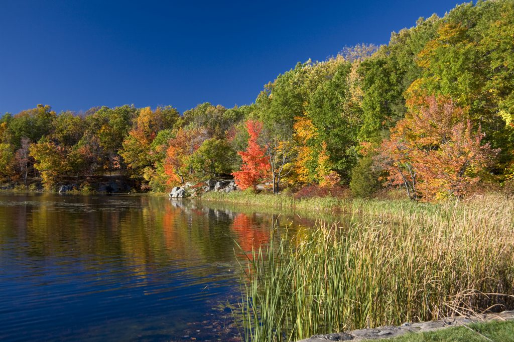"""polarizer filter applied, Wawaynda lake, NJ"""