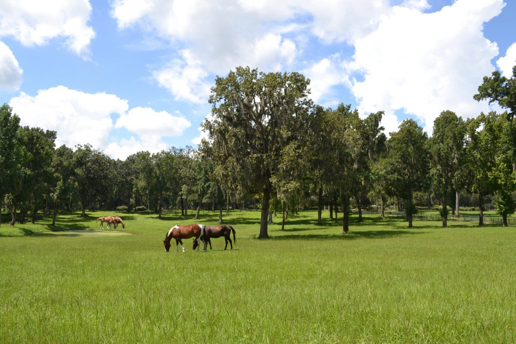 One of many picturesque horse farms in Ocala