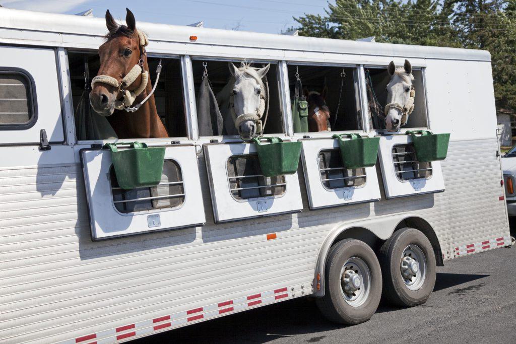 Horse Trailers Steel Vs Aluminum Crossroads Trailer Sales Blog