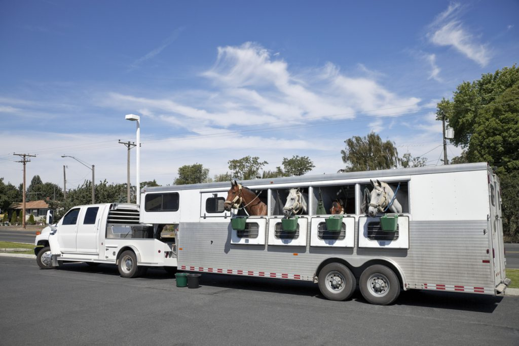 Horse Trailers for Sale in NJ