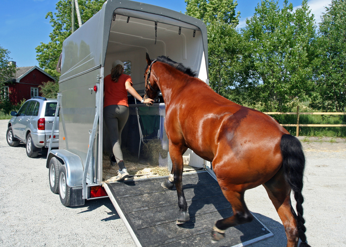 Horse Trailer Buying Guide