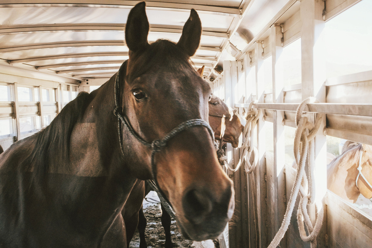 Easy Tricks to Help Load Your Horse onto a Horse Trailer